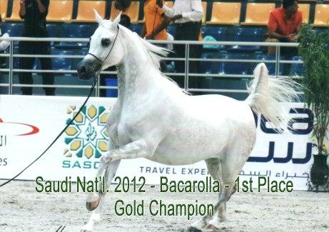 bacarolla_Saudi national2012