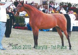 Marylla_Saudi10