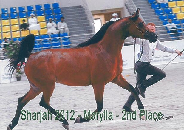 Marylla_Sharjah12