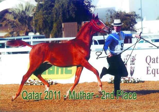 Muhtar_Qatar11
