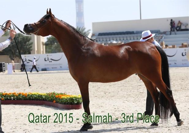 Salmah_Qatar15