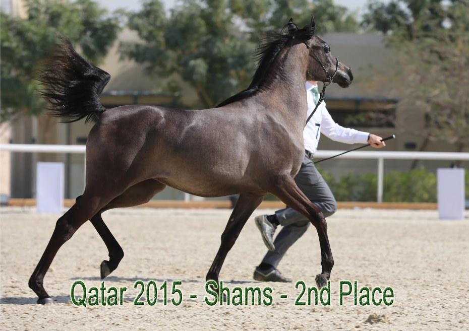 Shams_Qatar15.jpg