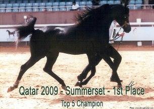 Summerset_Qatar09
