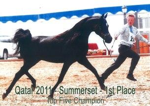 Summerset_Qatar11